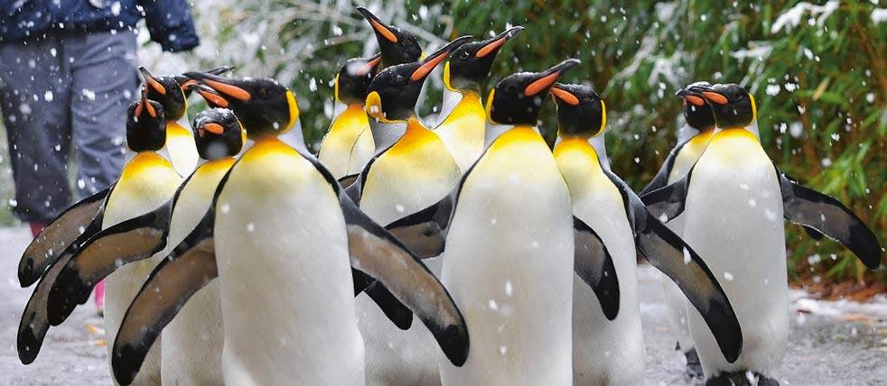 Exklusive Führung im Zoo Zürich